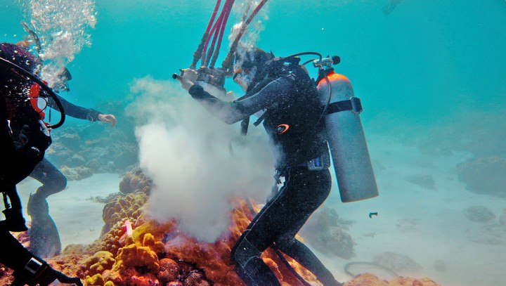 Divers in the South Pacific examine fossil corals