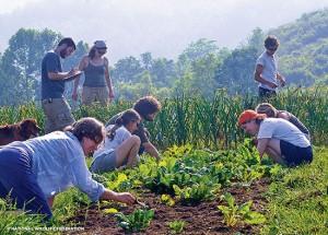 NWF-Campus-Community-Garden